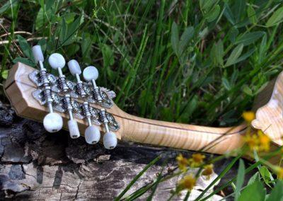 mandolin-a5-146-091