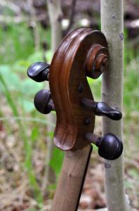 fiddle-006-0035
