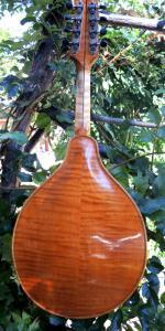 mandolin-a2-213-474